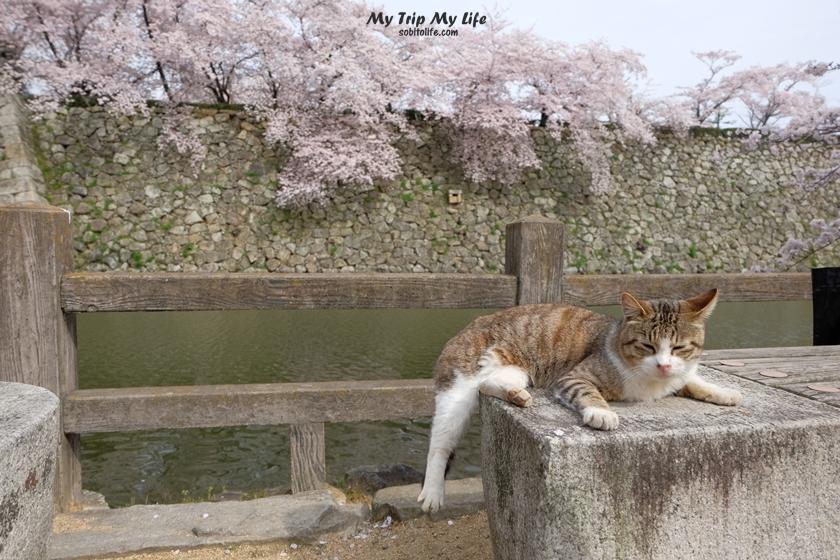 【日本關西賞櫻】超美世界遺產‧姬路城 @MY TRIP ‧ MY LIFE