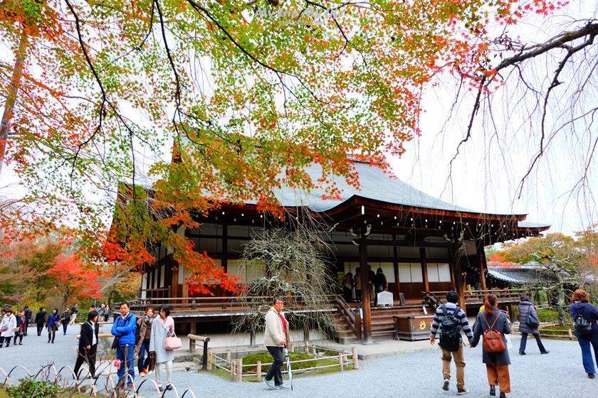 【日本關西賞楓】京都 – 嵐山、天龍寺 @MY TRIP ‧ MY LIFE
