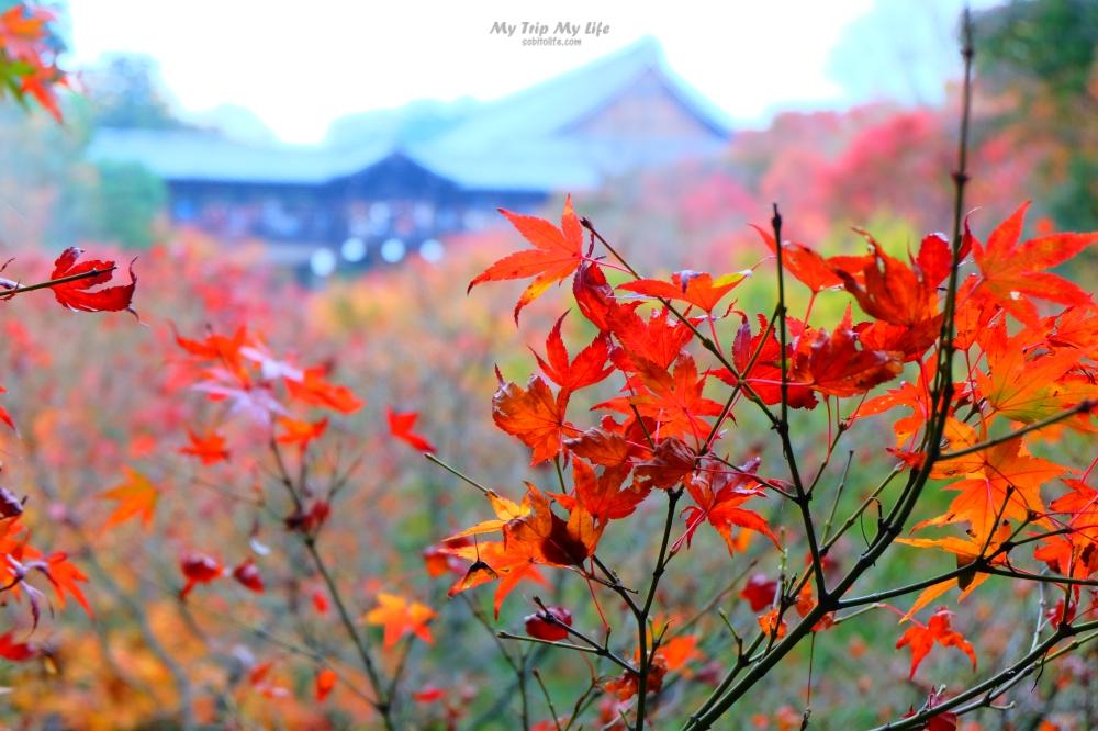日本關西六日行程 – 大阪、京都、姬路 @MY TRIP ‧ MY LIFE
